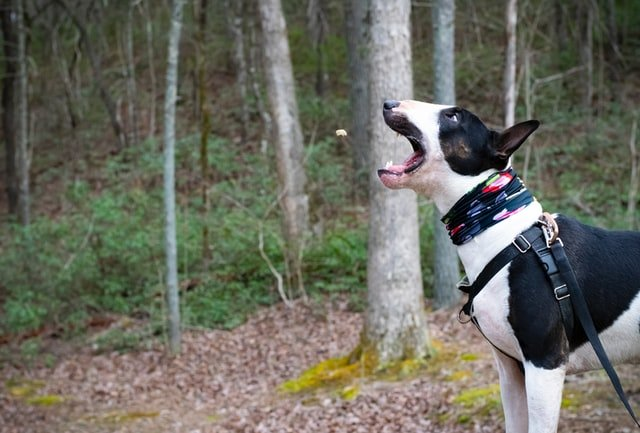 fresh breath dog treats dental sticks