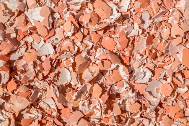 Egg shells material